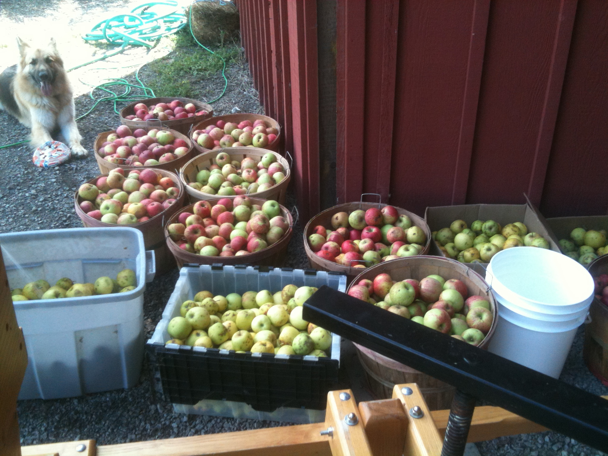 New Project: Apple Cider