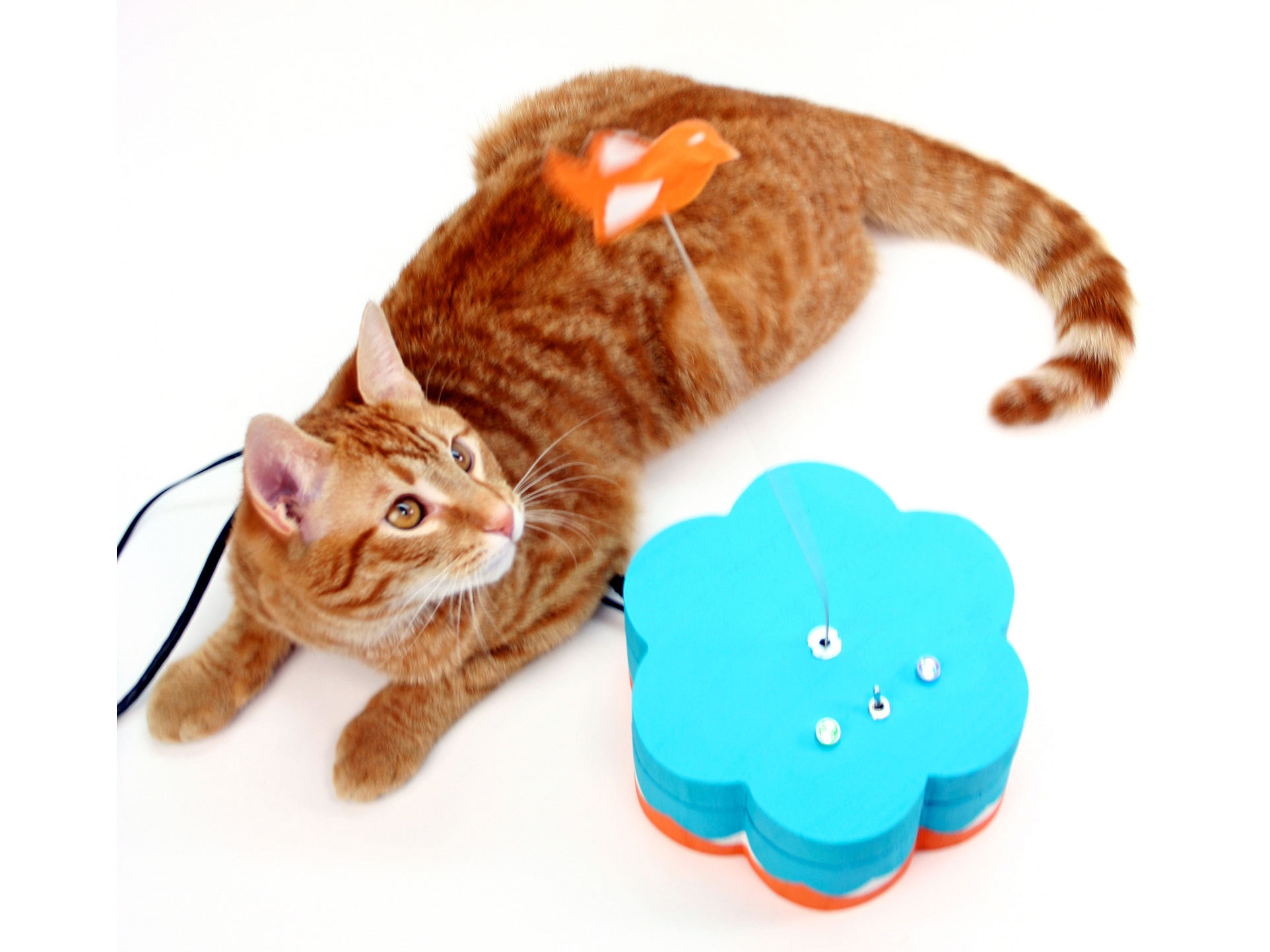Kitty Twitty CatToy
