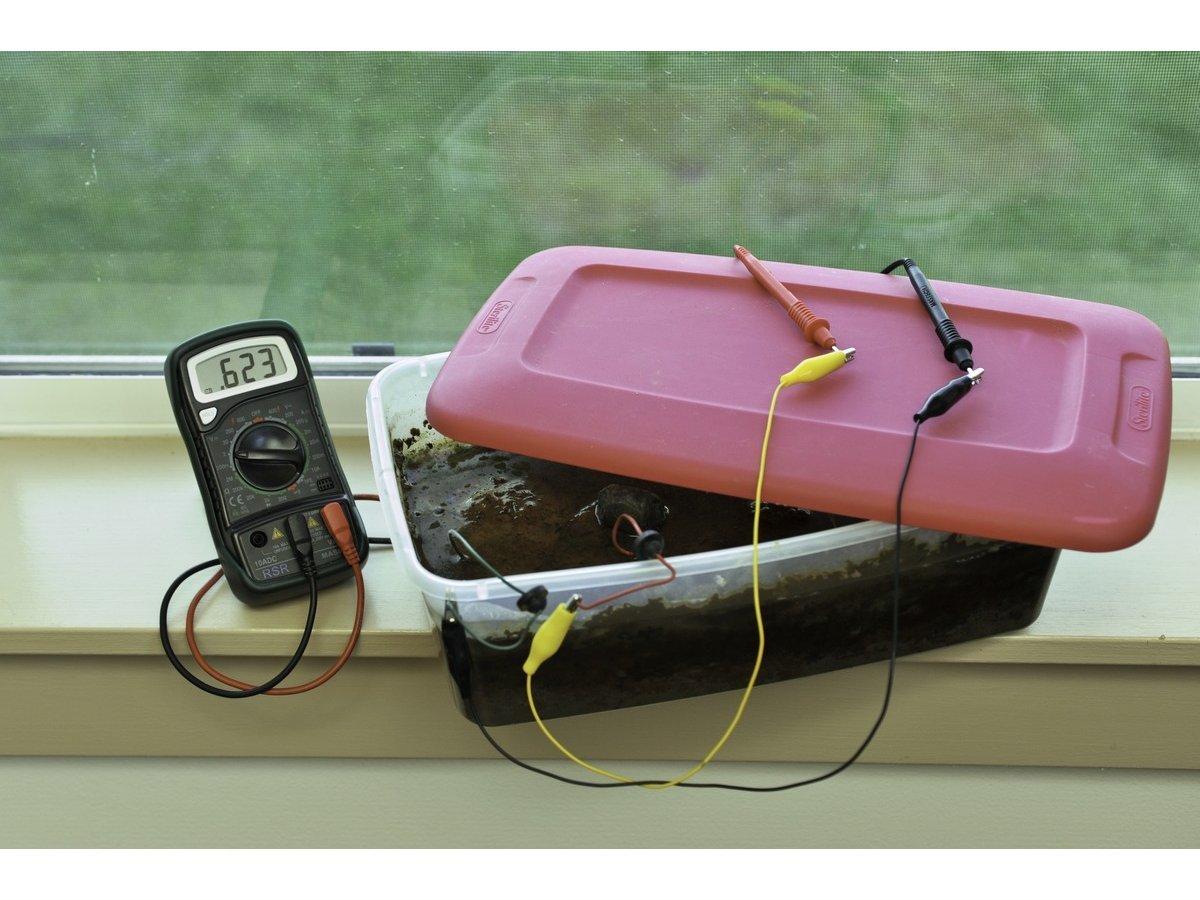 Bacteria Battery