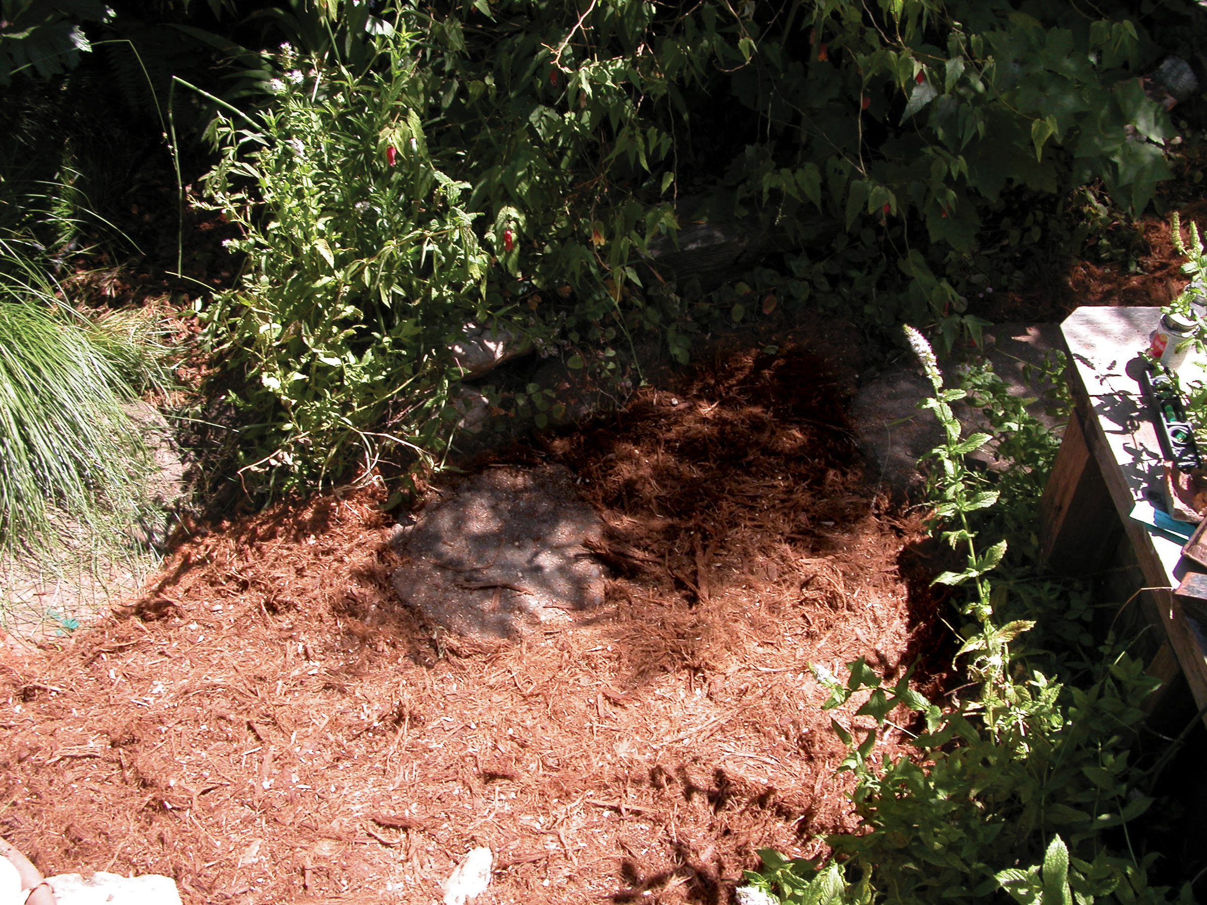 New Project: Backyard GraywaterSystem