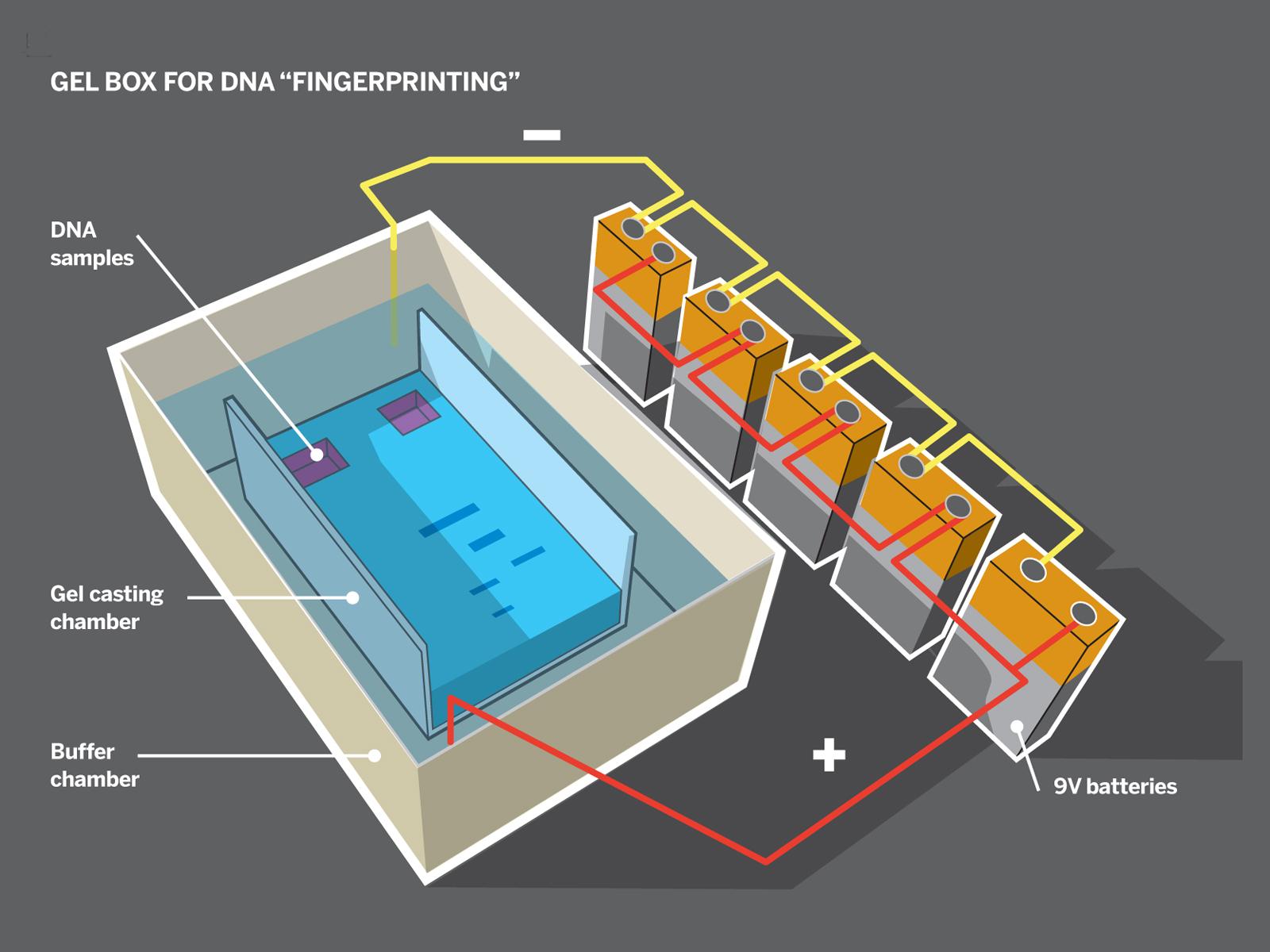 Home Molecular Genetics